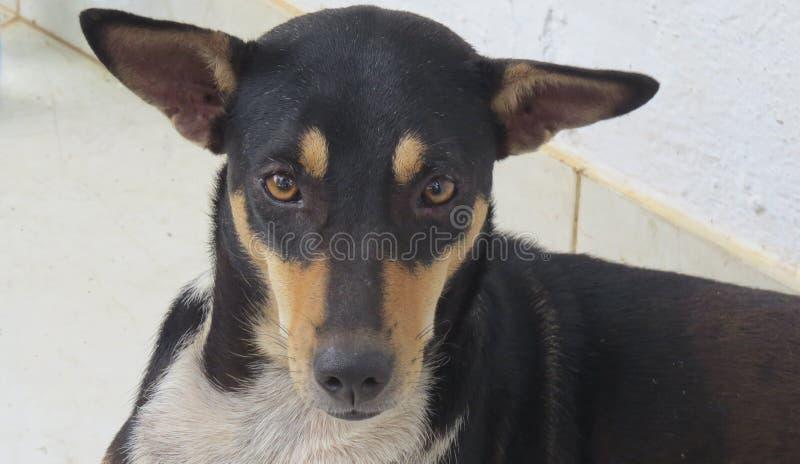 De grappige aanbiddelijke leuke close-up van de huisdierenhond stock afbeeldingen