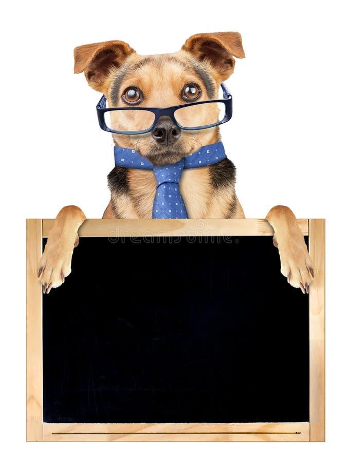 De grappige geïsoleerde band van hondglazen achter leeg bord royalty-vrije stock fotografie