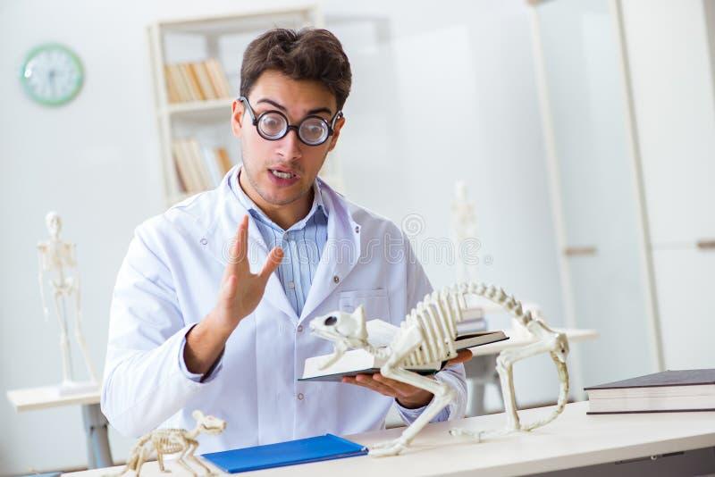 De grappige gekke student arts die dierlijk skelet bestuderen stock foto
