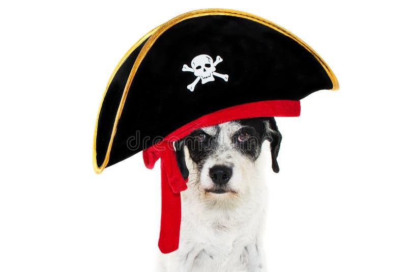De grappige hond die van het piraatkostuum Carnaval, Halloween of nieuw jaar vieren Ge?soleerdj op witte achtergrond stock afbeeldingen