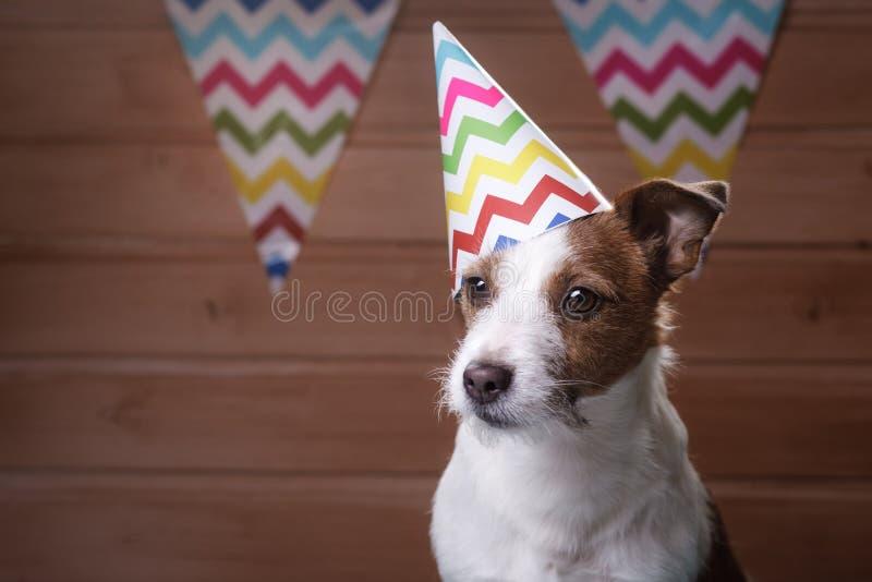 De grappige hond van hefboomrussell met zomers GLB op het hoofd royalty-vrije stock afbeelding