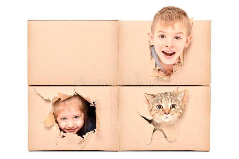 De grappige jonge geitjes en de kat kijken uit een gescheurd gat in een doos stock afbeelding
