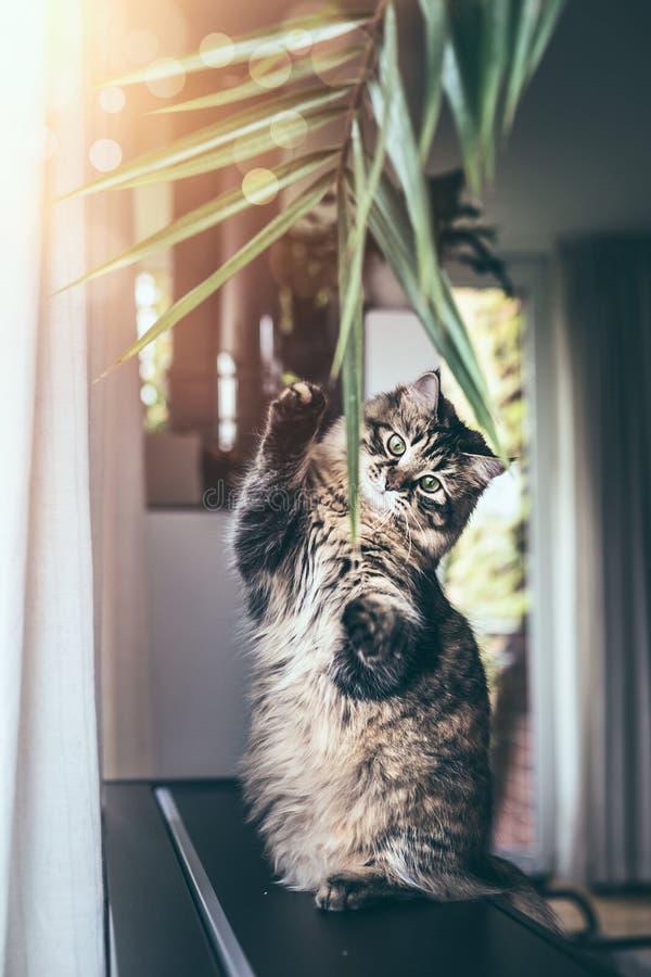 De grappige jonge kat zit op zijn achterste benen en speelt met het hangen van de binnenbladeren van de huisinstallatie in woonka royalty-vrije stock afbeeldingen