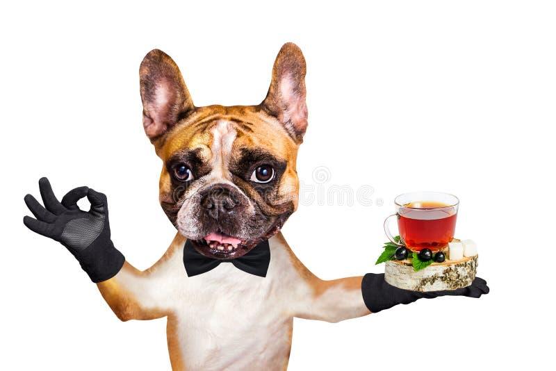 De grappige kelner van de hond rode Franse buldog in een zwarte thee van de vlinderdasgreep in een glasmok en toont ong. een teke stock foto