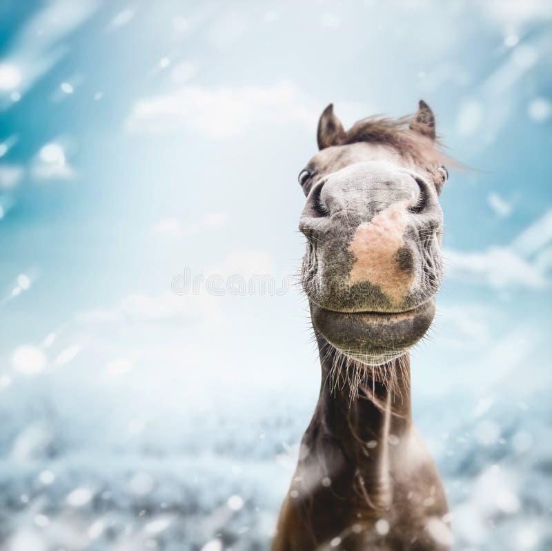 De grappige Snuit van het paardgezicht met neus bij de winter en sneeuw stock afbeeldingen