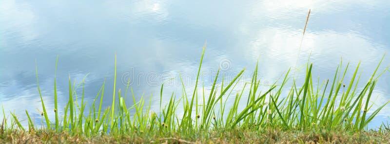 De grasbloem isoleert op witte achtergrond stock fotografie