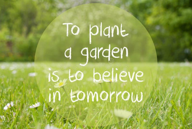 De Grasweide, Daisy Flowers, de Tuin van de Citaatinstallatie gelooft in Morgen stock foto's