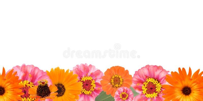 De grens van de bloem