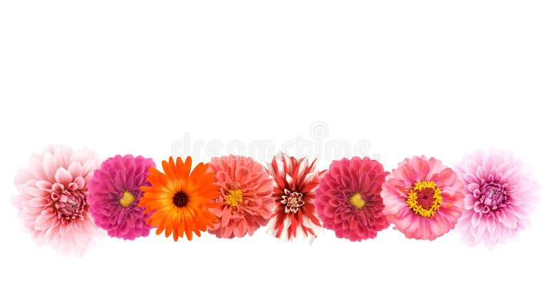 De grens van de bloem stock fotografie