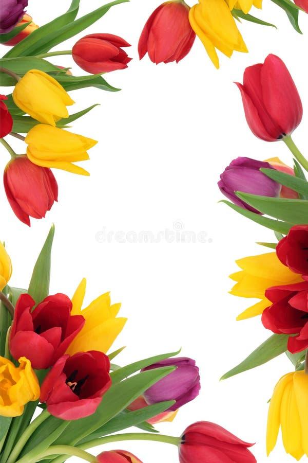 De Grens van de Bloem van de tulp stock afbeeldingen