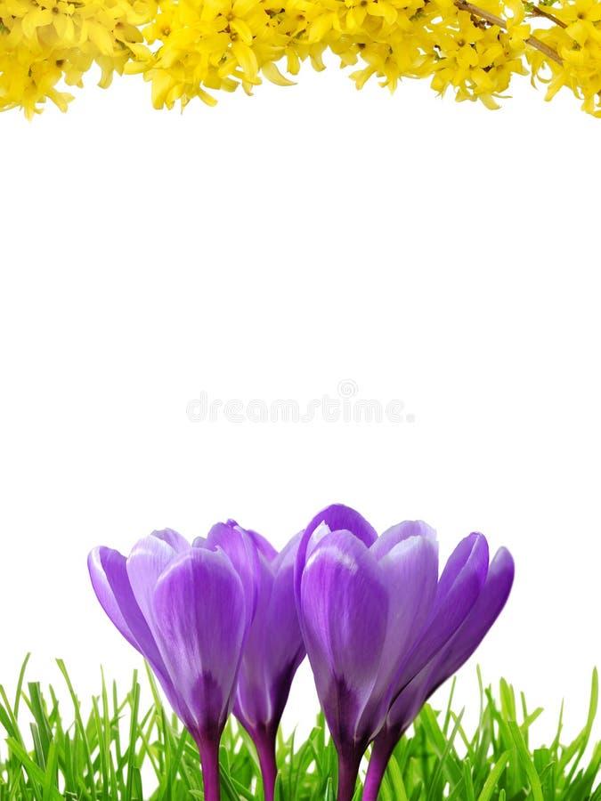 De grens van de lente in 3 kleuren royalty-vrije stock afbeeldingen