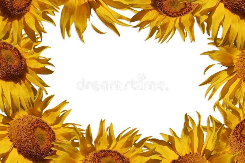De grens van de zonnebloem stock foto