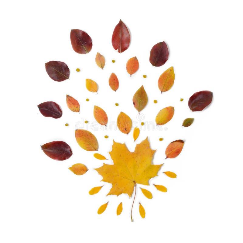 De Grens van de herfst Blauwe hemel Samenstelling van trillende rode en gele bladeren op een witte achtergrond Vlak leg Hoogste m stock afbeelding