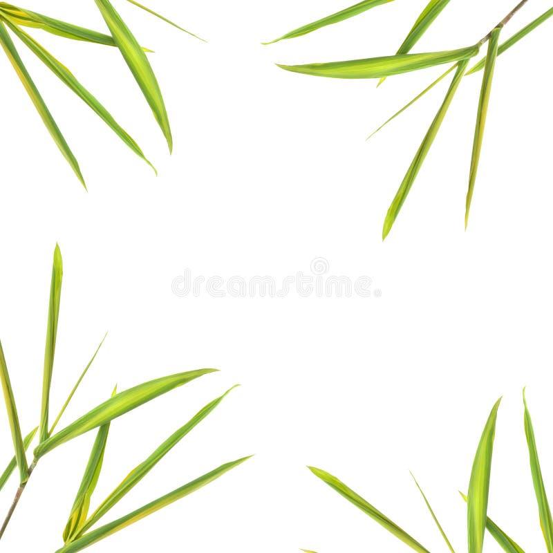 De Grens van het Blad van het bamboe stock fotografie