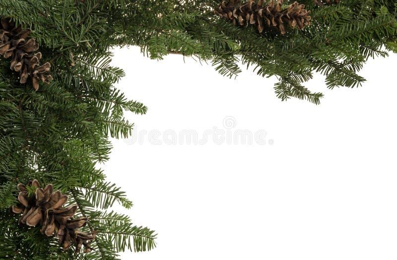 De grens van Kerstmis van levende greens en denneappels royalty-vrije stock foto