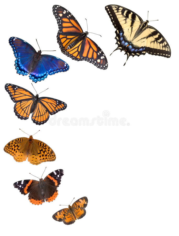 De grensachtergrond van de vlinder stock afbeeldingen