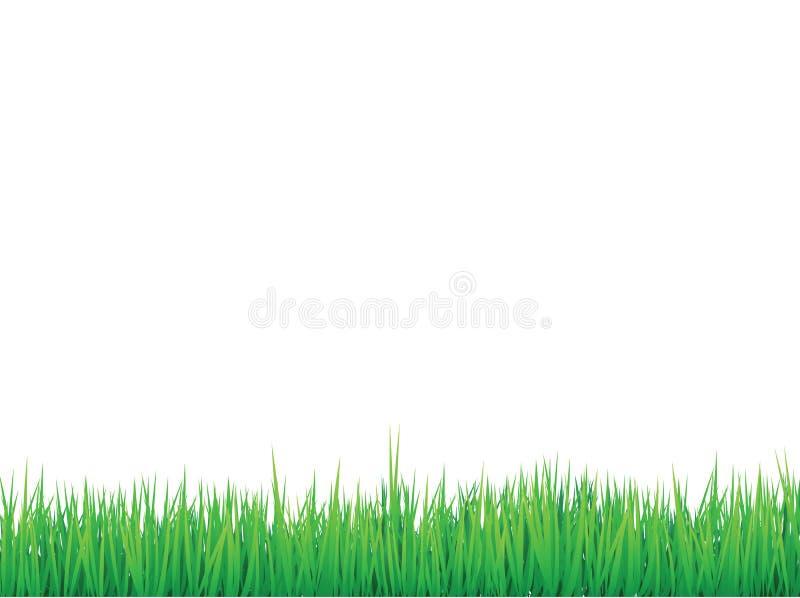 De grenzenachtergrond van het gras
