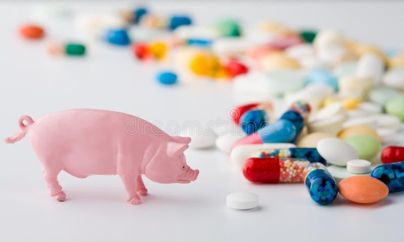 De griepremedie van het varken stock foto