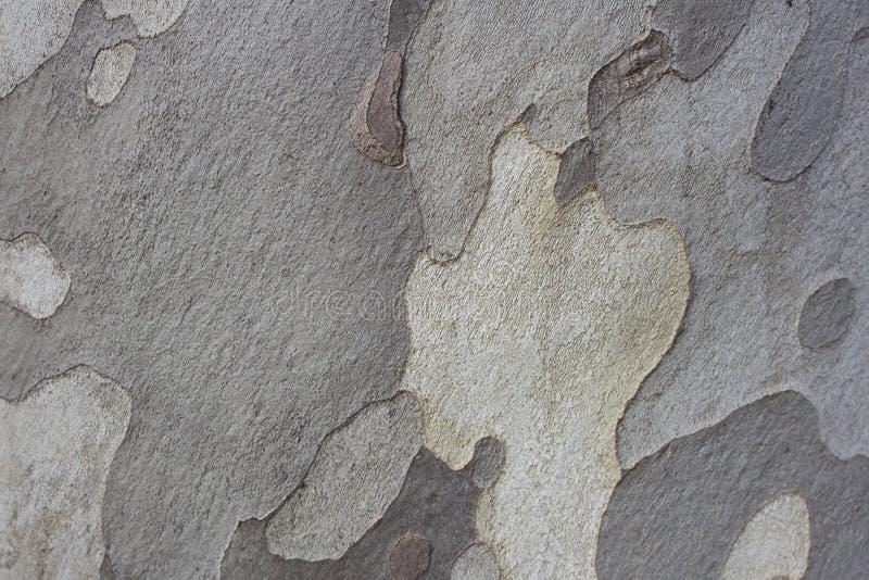 De grijze achtergrond van de boom houten textuur stock foto