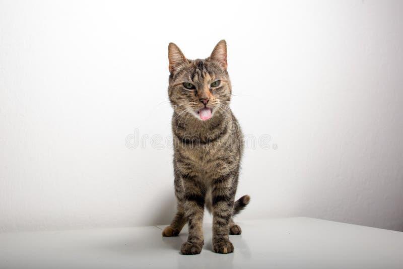De grijze gestreepte katkat let op iets stock foto