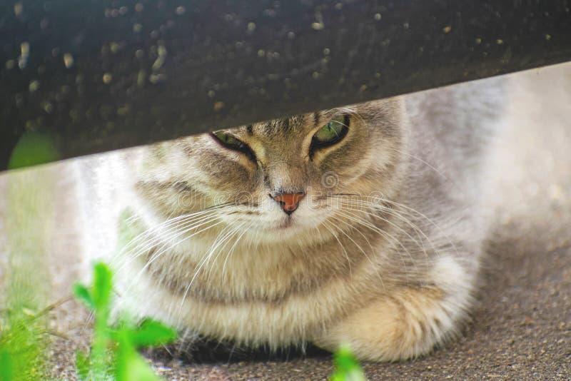De grijze gestreepte katkat let op van achter een pijp stock foto's