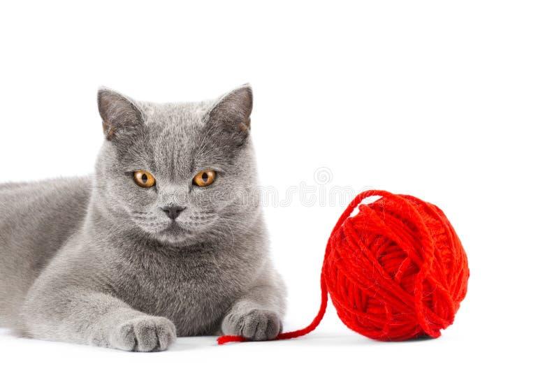 De grijze kat met bal van draden sluit omhoog stock foto