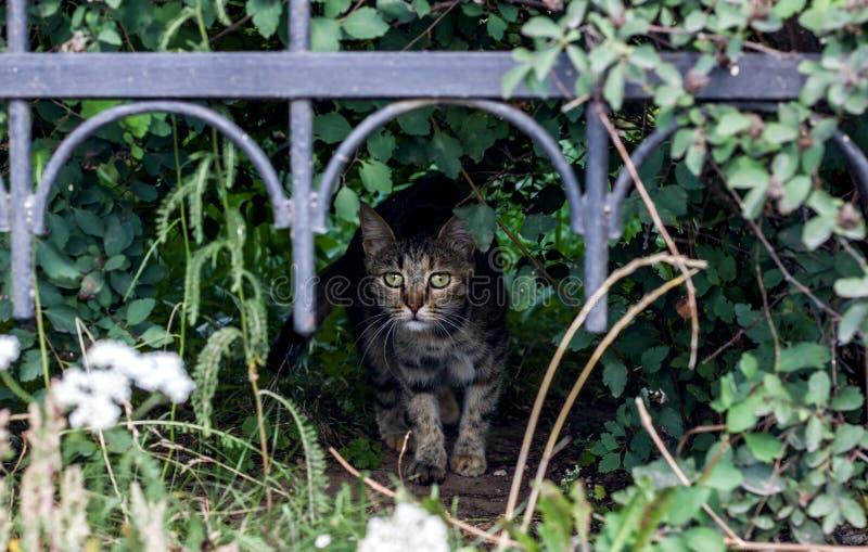 De grijze kattenhuiden in de struiken stock afbeeldingen