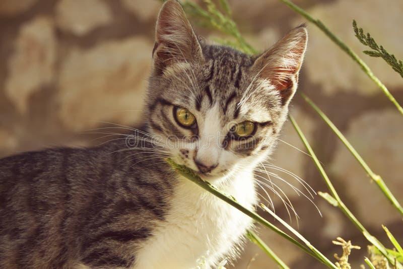De grijze kleine kat met grote groene en gele ogen ruikt blad van gr. royalty-vrije stock foto's