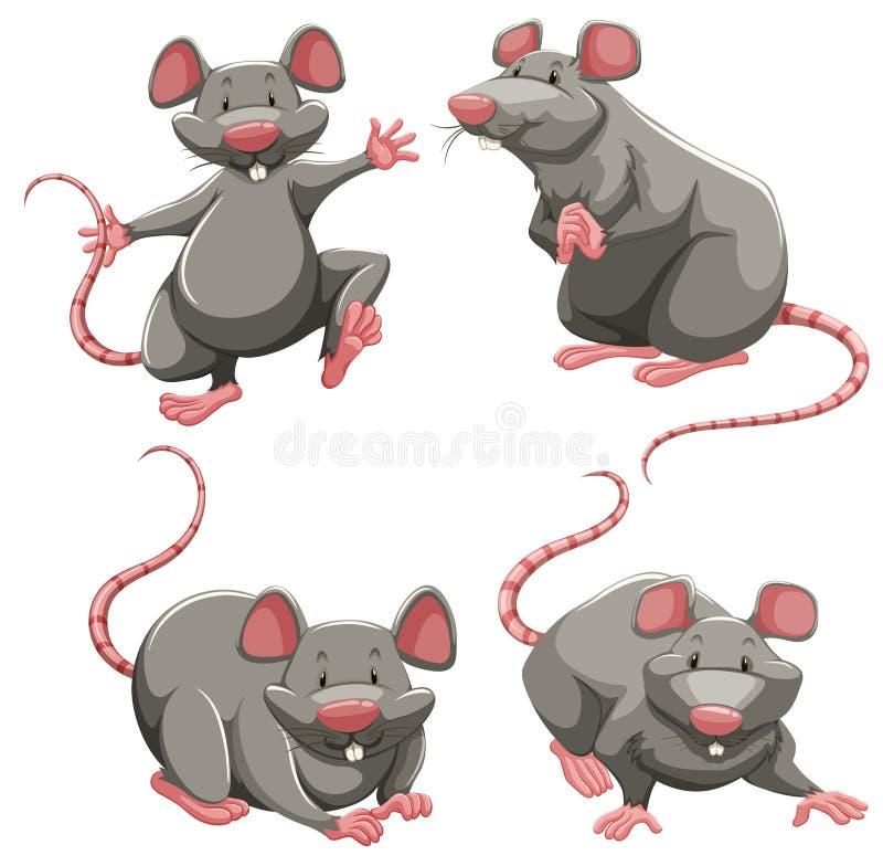 De grijze rat in verschillend stelt stock illustratie