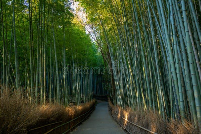 De groef van het Arashiyamabamboe in Kyoto, Japan stock fotografie