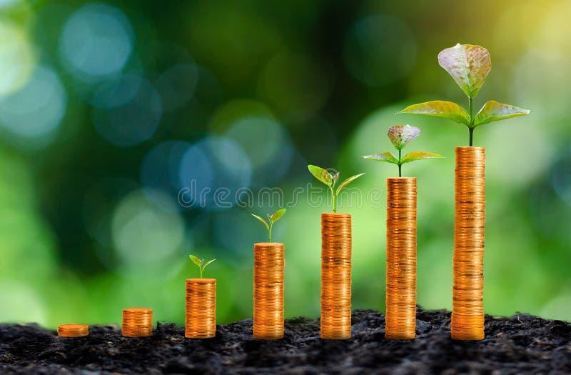 De groei van gouden muntstukken heeft een natuurlijke groene boom als achtergrond stock afbeelding
