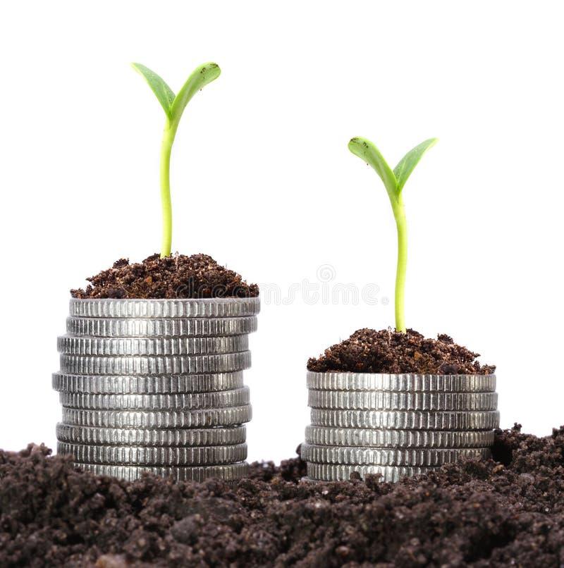 De groei van het geld. stock foto