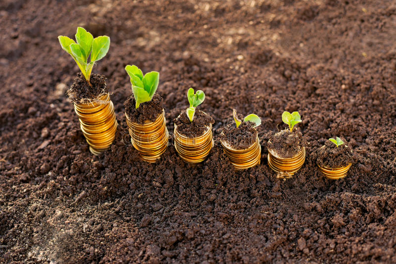 De Groei van het geld Honderd dollarrekening het groeien in het groene gras stock afbeeldingen
