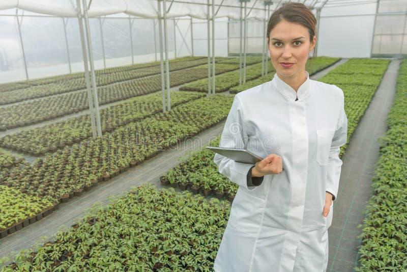 De Groei van serrezaailingen Vrouwelijke Landbouwingenieur royalty-vrije stock afbeelding