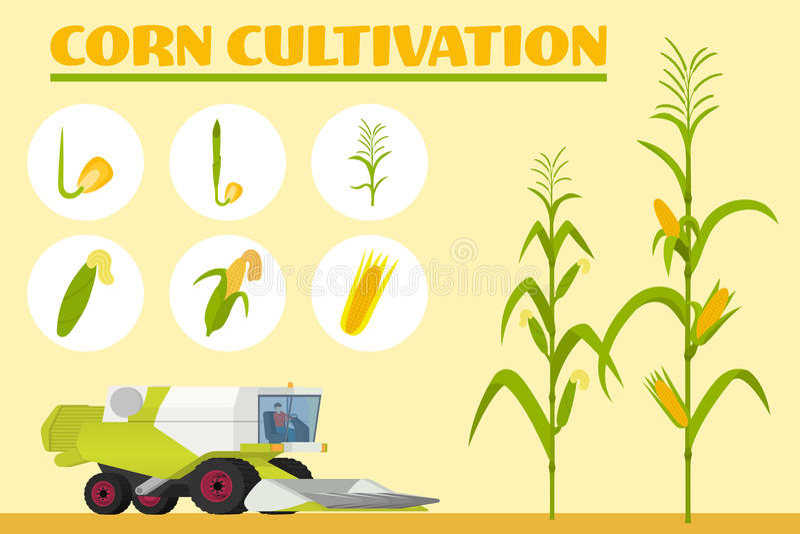De groeistadia van zaad aan volwassen installatie