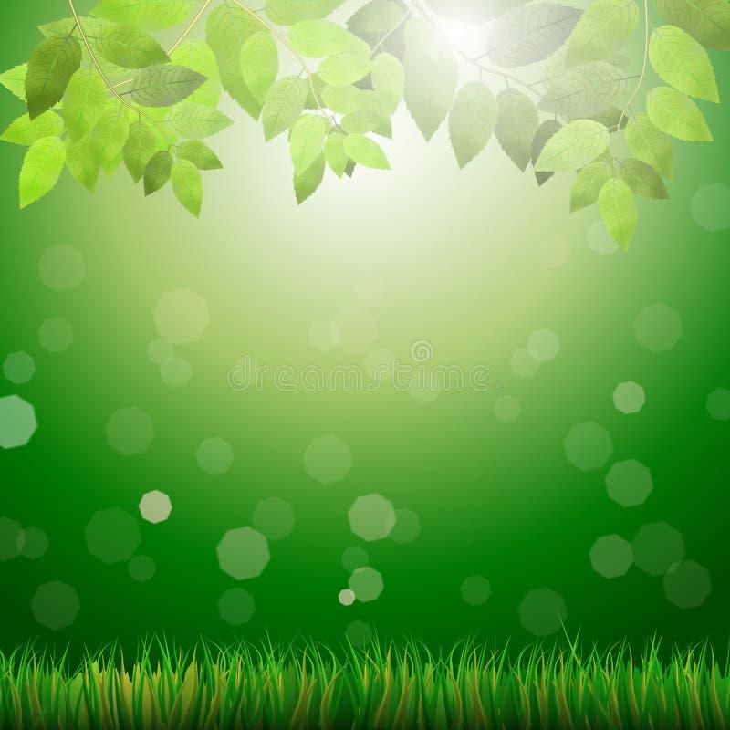 De groene achtergrond met gras, doorbladert, bokeh en zonneschijn vector illustratie