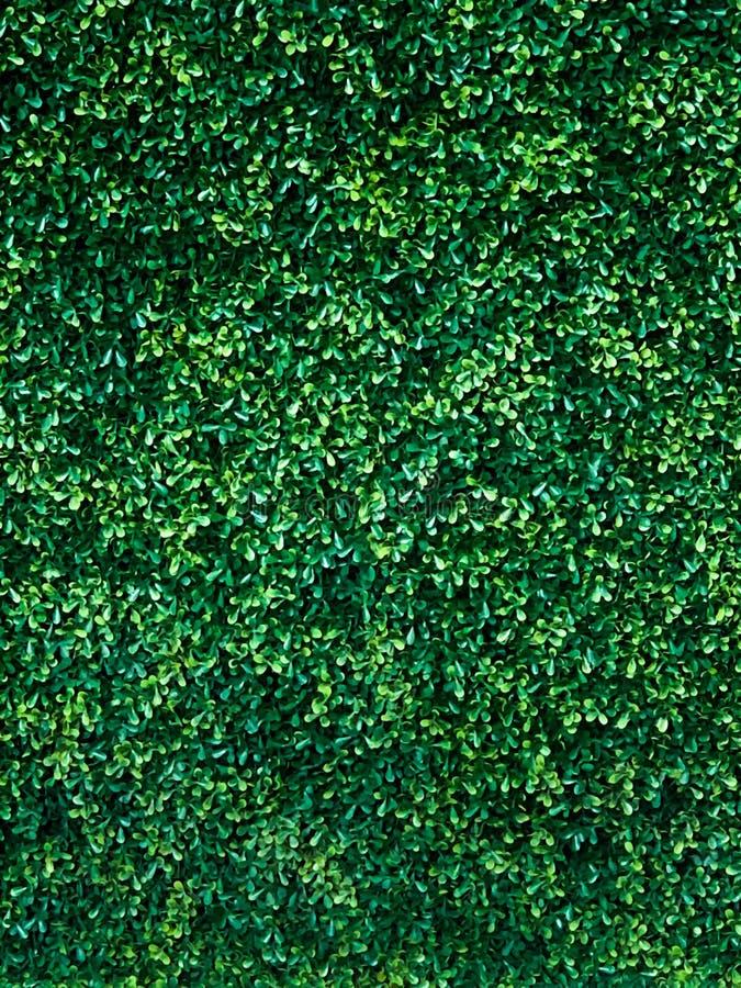 De groene achtergrond van de boommuur stock afbeelding