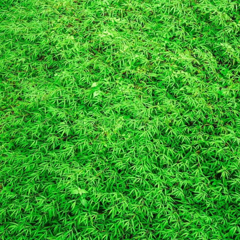 De groene achtergrond van de grastextuur stock fotografie