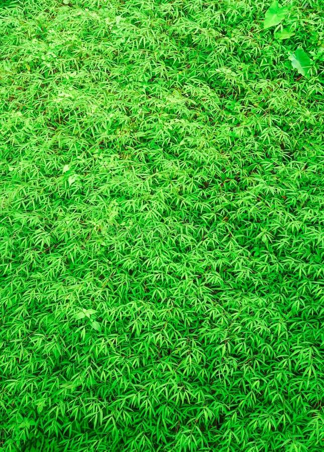 De groene achtergrond van de grastextuur royalty-vrije stock foto