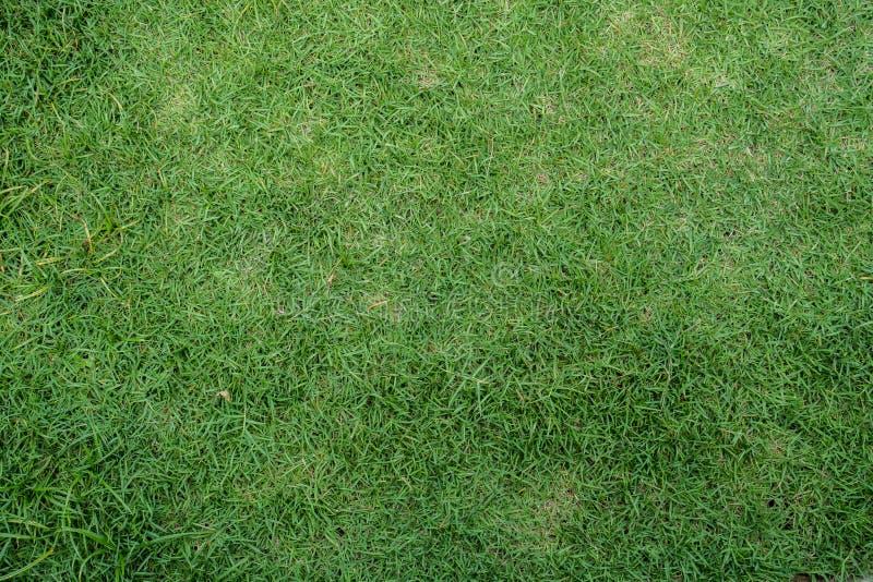 De groene achtergrond van de graswerf royalty-vrije stock afbeelding