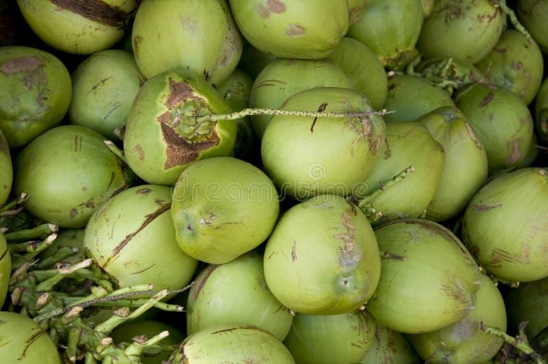 De groene achtergrond van de Kokosnoot royalty-vrije stock afbeelding