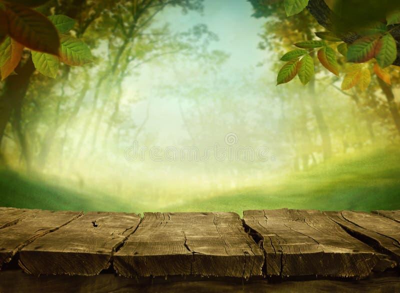 De groene achtergrond van de lente stock afbeeldingen