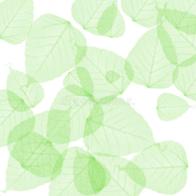 De groene achtergrond van de zomerbladeren stock foto