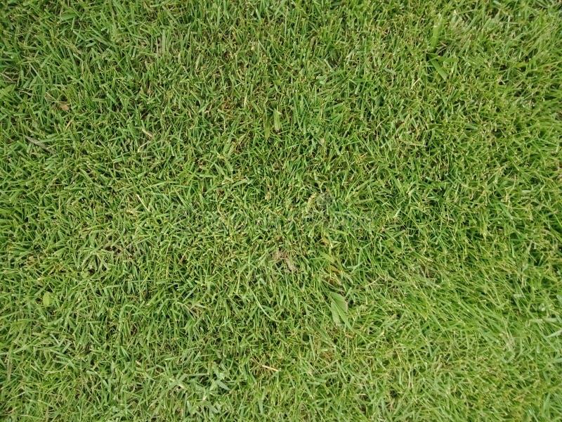 De groene achtergrond van de grastextuur met onderbrekingen, geweven behang als achtergrond stock foto