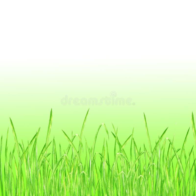 De groene Achtergrond van de Graszomer vector illustratie