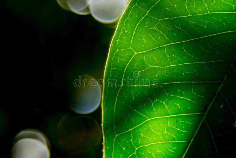 De groene Achtergrond van het Blad stock afbeeldingen