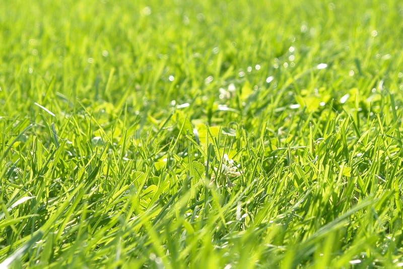 De groene Achtergrond van het Gras stock foto's