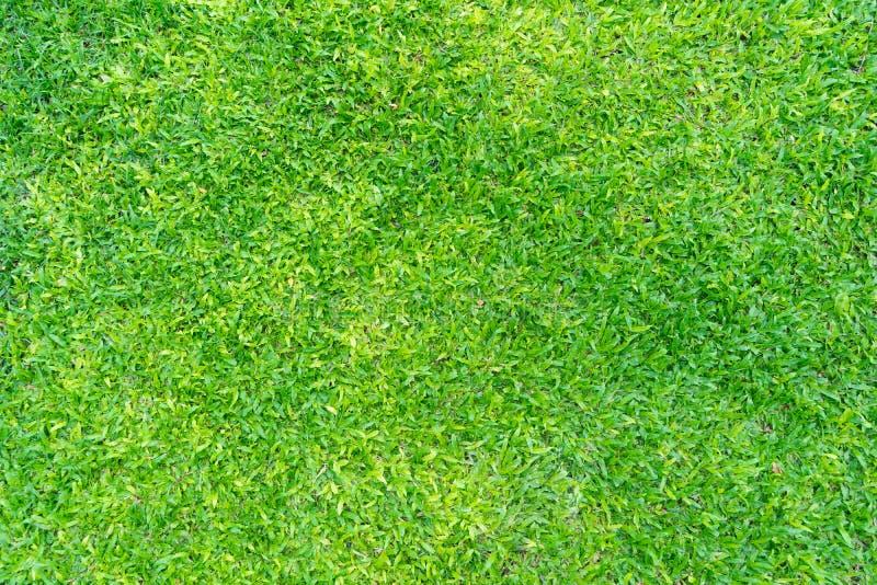 De groene achtergrond van het grasgebied stock foto's