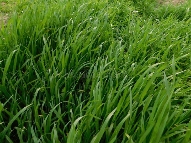De groene achtergrond van het grasgebied onder de zon stock afbeelding