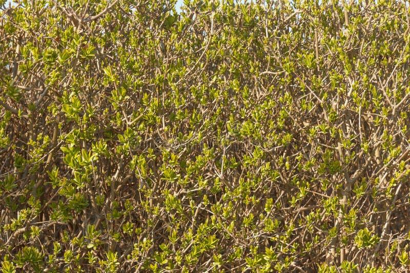 De groene Achtergrond van de Lentebladeren Ecologie horizontale mening stock foto's